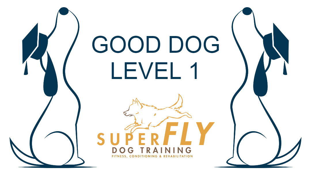 Good Dog Level 1 - Online Course - £60
